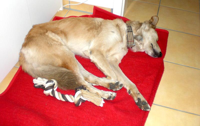 jetzt habe ich einen hund leben mit superhund. Black Bedroom Furniture Sets. Home Design Ideas